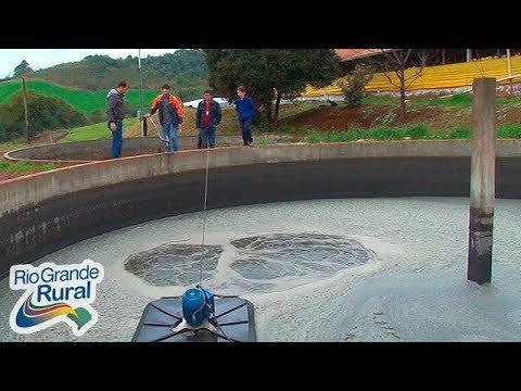 Projeto desenvolve práticas de manejo adequado de dejetos suínos - Rio Grande Rural