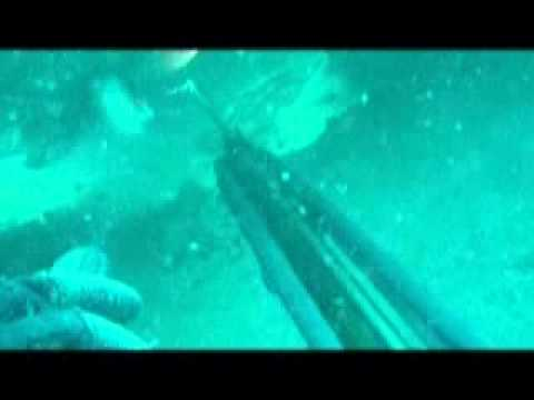 Spearfishing the Fin Barge, Gulf