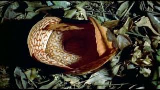 BBC - Wild Indonesia