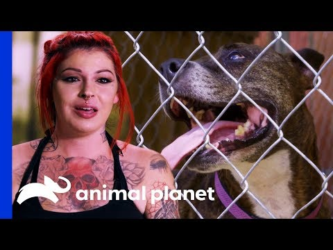 Playful, Loveable Pit Bull Coco Yields Zero Adoption Applications | Pit Bulls & Parolees