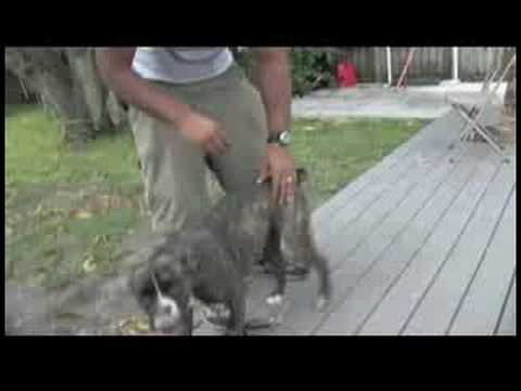 dog-training-&-ownership-:-how-to-train-a-dog-not-to-bite