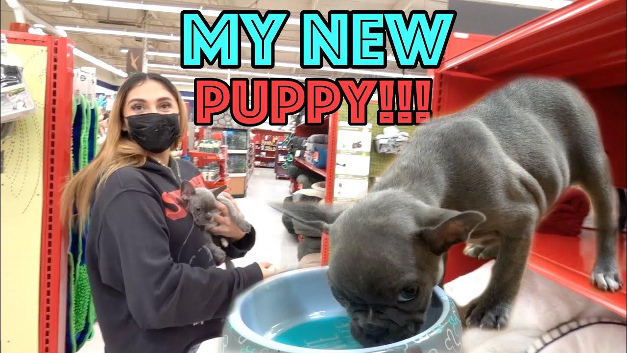 I GOT A NEW PUPPY!!!