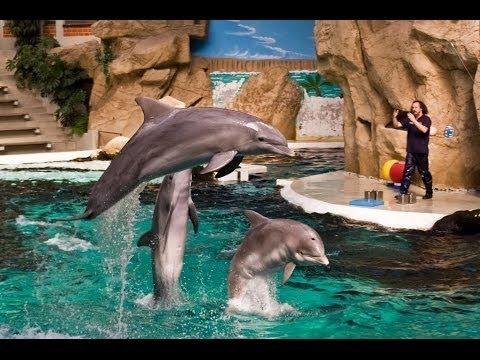 zoo duisburg freikarten