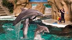 Dolphin Show  Delfin Show Zoo Duisburg Sea World