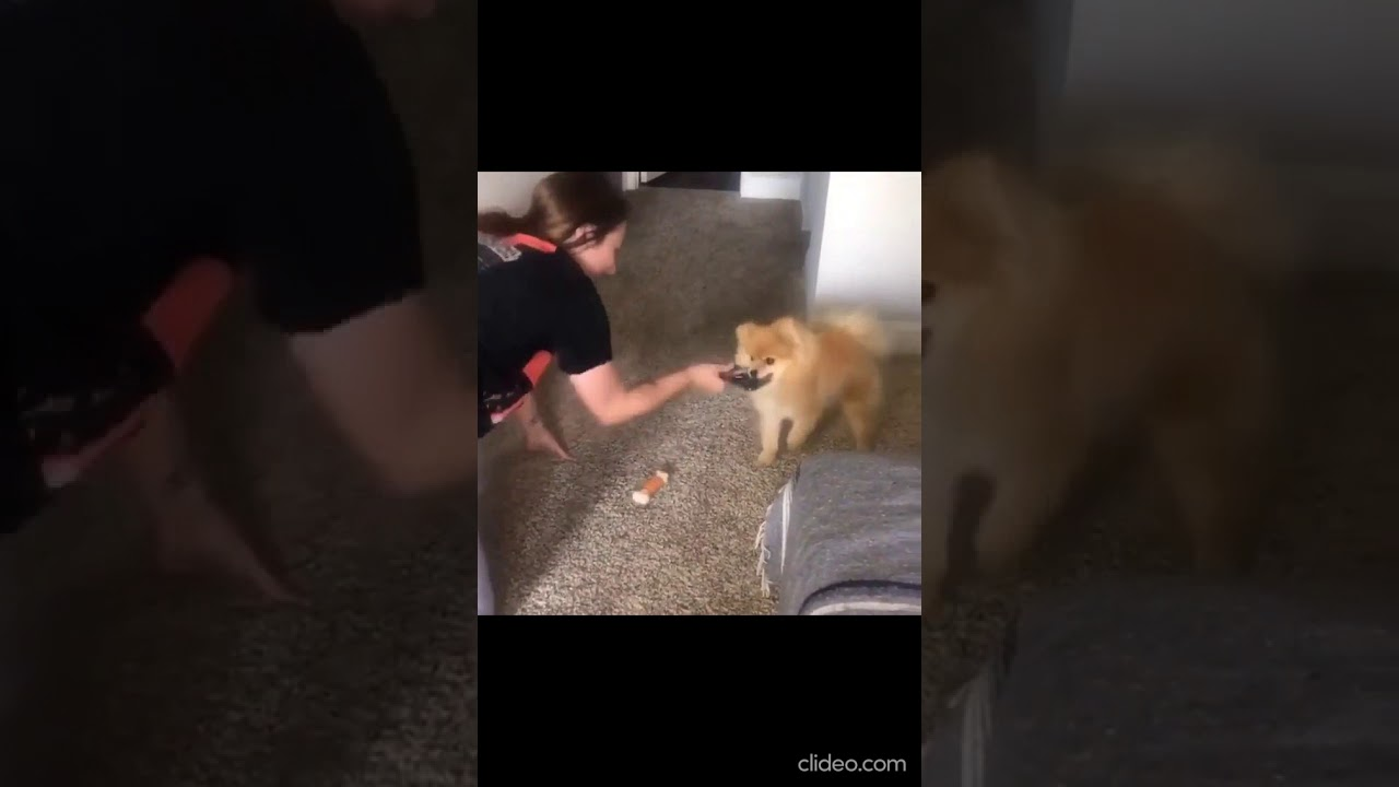 Cute funny puppies