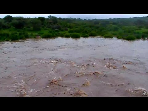 Heavy rains turn the Ewaso Ng'iro River into a torrent. Africa Animals cam 24 April 2018