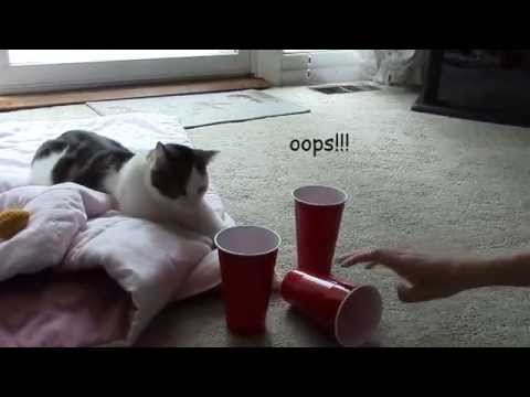 Cat Videos: Cat finds Ball in Cup Game