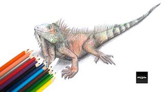 Speedpaint Iguana Color pencil