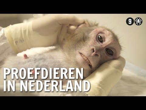Waarom we in Nederland proefdieren hebben   De Buitendienst over Dierproeven