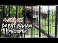 Hunting Murai Batu Bakalan Prospek  Mp3 - Mp4 Download