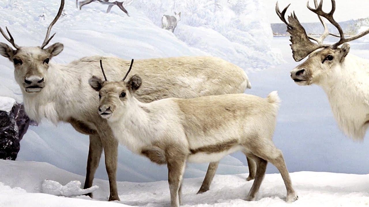 Les rennes en primeur youtube for Les architecteurs rennes