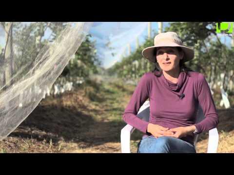 Uruguay Agrointeligente: Hortifruticultura