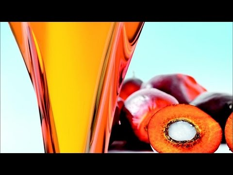 Crude Palm Oil Prices Rise Again | Fourth Day in a Row
