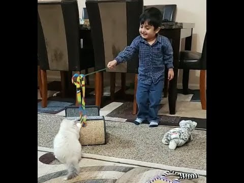 Rayyan playing with baby cat! - video for kids!