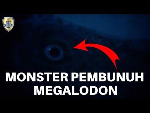 Megalodon - 6 Dinosaurus Yang Ditakuti Hiu Megalodon (Asli)