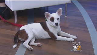 Pet Of The Week: Wags, Whiskers & Wings Gala