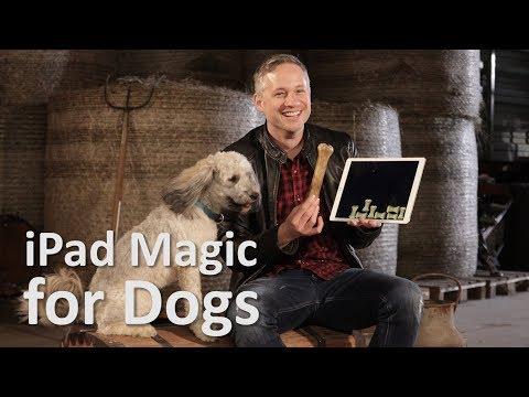 Dogs React To iPad Magic