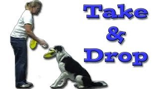 Take Drop The Frisbee: Disc Dog Training