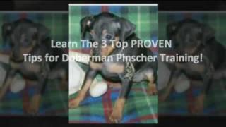 Doberman Pinscher Dog Training - How To Train A Doberman Pinscher