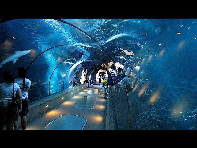 Отдых в Турции, Анталия аквариум