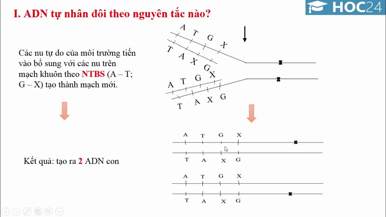 Chuyên đề ADN và gen: ADN và bản chất của gen - Sinh học 9 - Hoc24.vn