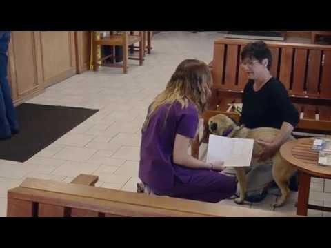 Veterinary Informational Interview
