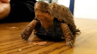 turtle jump scare l wtf