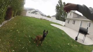 Alpha Instincts - Speciality Training - Working Dog Foundation
