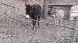 Histoire d'un âne barrière