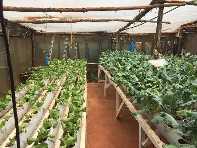 Hydroponics farming system in Kenya - part 1