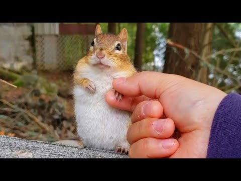 Best Moments With Little Precious Chipmunk Friends Compilation 2019