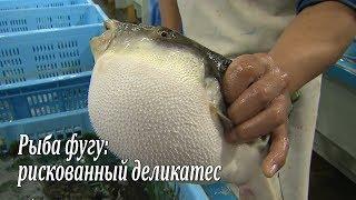 Рыба фугу: рискованный деликатес / Fugu-fish: risky Japanese delicacy / フグ(Подписывайтесь на HD канал RTR-JAPAN: https://www.youtube.com/c/RTRJapan Каждый год десятки японцев получают отравления, попробо..., 2012-10-29T03:25:20.000Z)