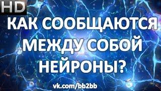 Как сообщаются между собой нейроны. Нейромедиаторы.