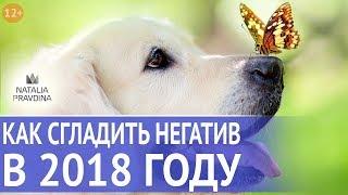 Прогноз на год Собаки: как сгладить негативное влияние года и активизировать помощь. Все по Фен Шуй