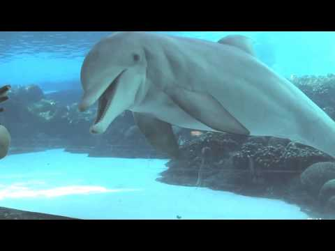 Discovery Cove Theme park in Orlando, Florida USA | Discovery Cove Travel Videos Guide