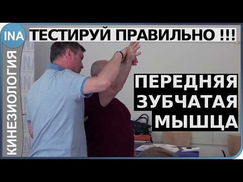 Верхняя задняя зубчатая мышца болит