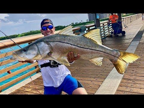 Florida Pier Produces *HUGE* Fish!!! (Juno Pier Snook Fishing)