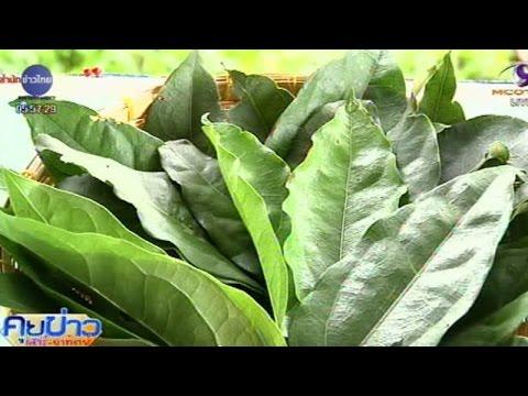 เกษตรสร้างชาติ : ย่านางสมุนไพรมหัศจรรย์   สำนักข่าวไทย อสมท