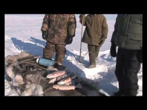 Охота и рыбалка за полярным кругом.