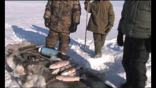 Охота и рыбалка за полярным кругом.(Охотничья экспедиция за полярный круг. 30км. от Ледовитого океана.Планета охотника Смотри также: http://www.youtube...., 2011-11-01T23:42:15.000Z)