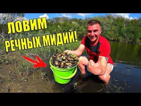 ЛОВИМ РЕЧНЫХ МИДИЙ! ГОТОВИМ НА КОСТРЕ! / Виталий Зеленый