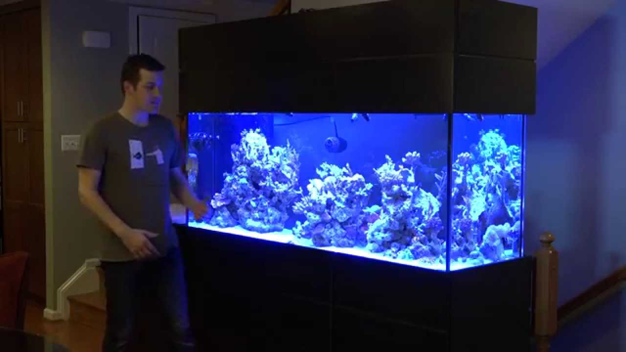 A Profile Of A Mr Saltwater Tank Vip Build Youtube