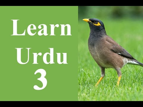 Learn Urdu through English for beginners lesson 3