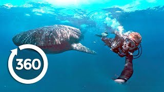 Protecting Ocean Anchor Species (360 Video)