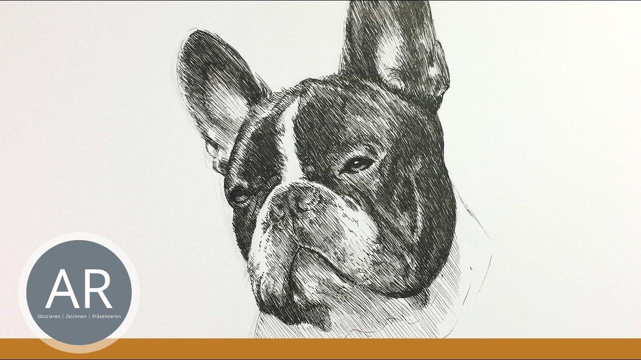 Tier Porträt Zeichnen Hunde Zeichnen Lernen