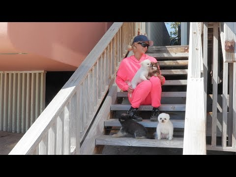 Paris Hilton's Home Activities: Malibu Quarantine Edition