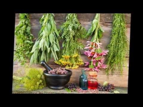 Эти лекарственные травы  можно вырастить на  своем огороде Фото+Названия