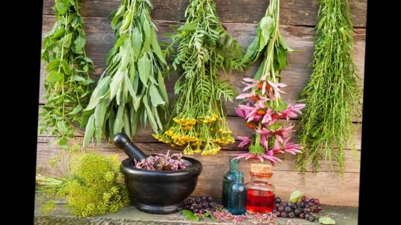 Трава широко используется для лечения простуд и гриппов. Исследования доказывают, что эхинацея может сократить продолжительность простуды и.