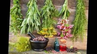 Эти лекарственные травы  можно вырастить на  своем огороде