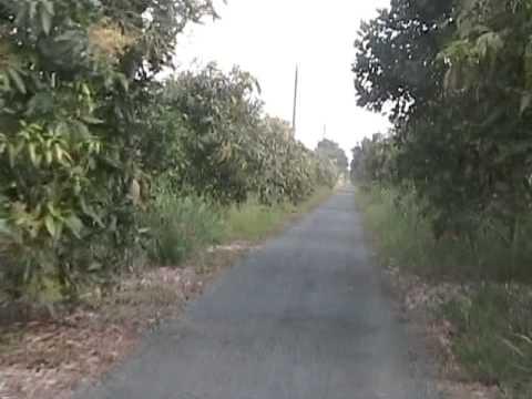 Dã ngọai rừng U Minh
